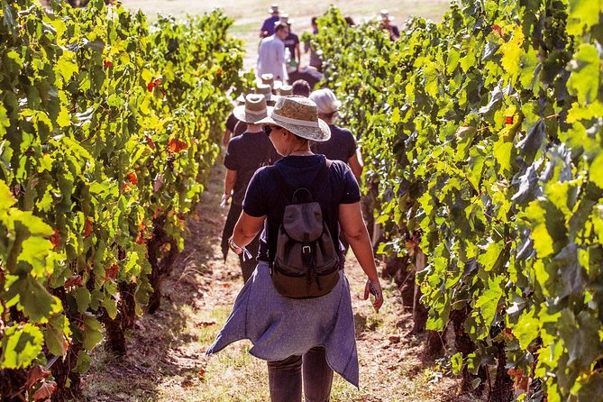 Athens Wine Tour - An Outstanding Full Day Experience For Dedicated Winelovers