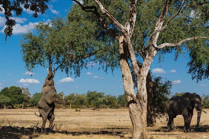16 Days Kenya Tanzania Uganda Safari