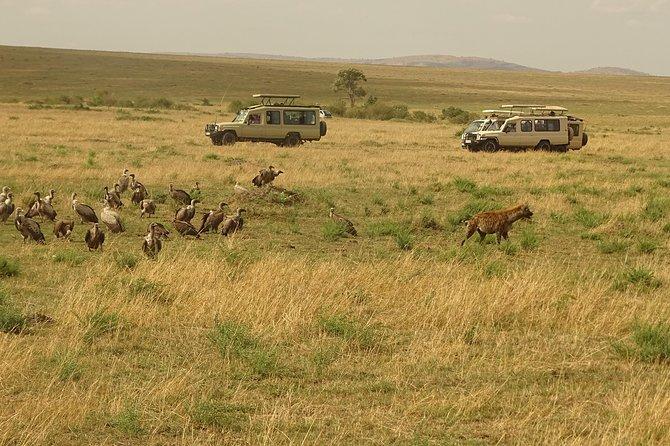 6 Days Masai Mara, Lake Nakuru, Amboseli Group Safari
