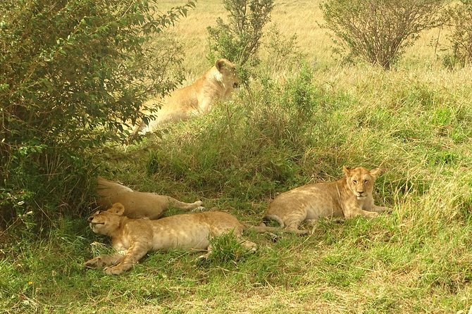 4-Day Masai Mara - Lake Nakuru Safari (Small group) photo 8
