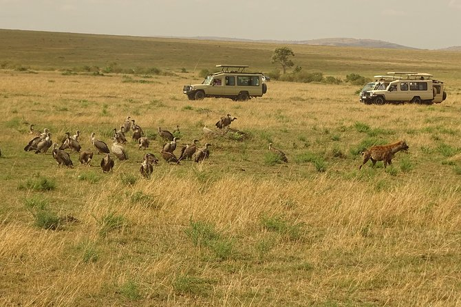 4-Day Masai Mara - Lake Nakuru Safari (Small group) photo 2