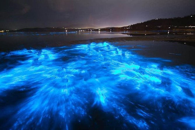 Bioluminescence Comb Jelly Night Tour Paddle Board and Kayak