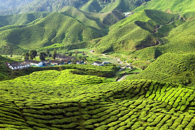 Private Full-Day Cameron Highlands Nature Tour from Kuala Lumpur photo 7