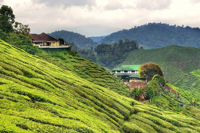 Private Full-Day Cameron Highlands Nature Tour from Kuala Lumpur photo 3
