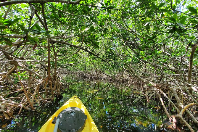 Kayak Tour of Mangrove Maze from Key West