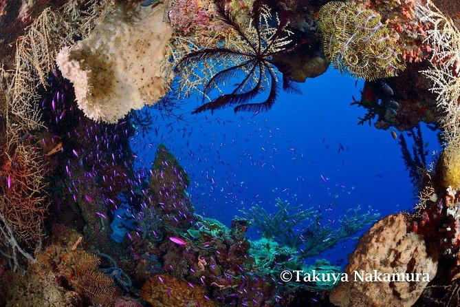Tawali Diving Package photo 12