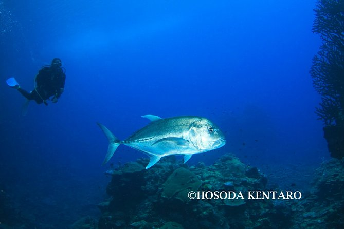 Tawali Diving Package photo 2