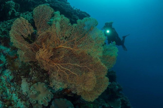 Tawali Diving Package photo 6