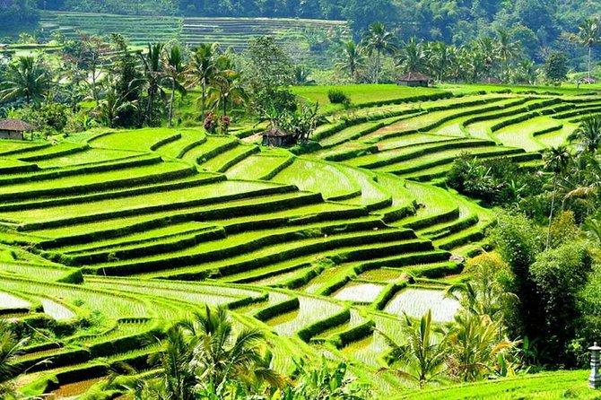 Tanah Lot - Jatiluwih (UNESCO) - Beratan lake -Hidden hill (Wanagiri)-FREE WI-FI