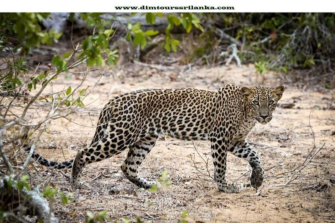 Yala Safari Day Tour From Bentota photo 1