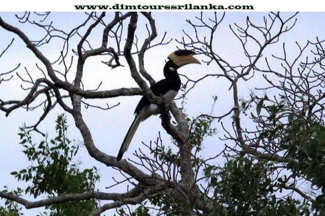 Yala Safari Day Tour From Bentota photo 2