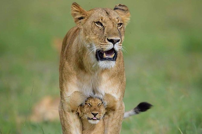 4 Days 3 Nights safari to Ruaha National Park photo 8