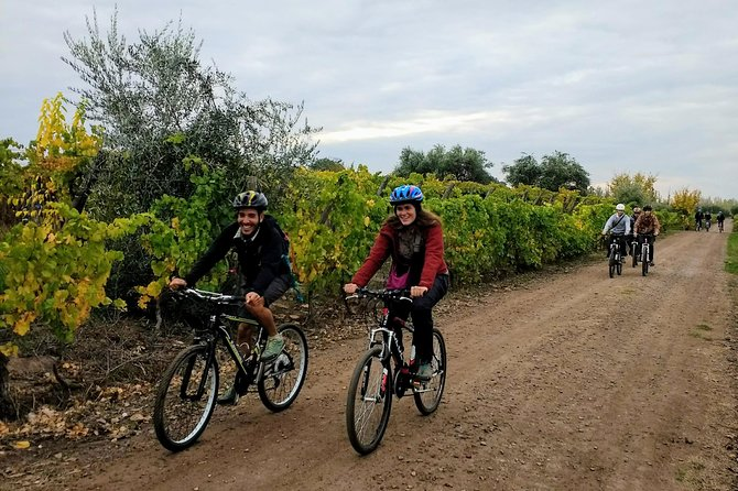 The perfect day discovering vineyards, wines and regional gastronomy by bicycle