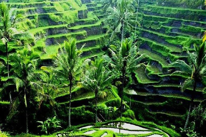 Ubud Traditional village & Campuhan Ridge Walk Day Tour