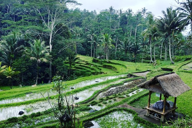 Best of Bali private customized tours