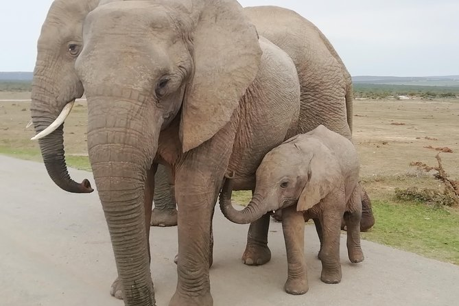 Addo Elephant Night Drive in 4x4 Vehicle Includes Transfer from Port Elizabeth