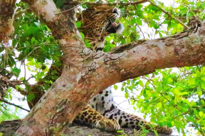 Isuru Safari