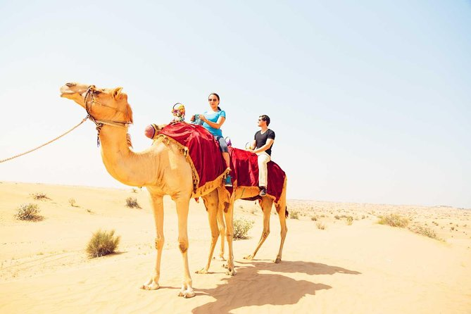 Abu Dhabi Desert Safari with Camel Ride in the Morning | MyHolidaysAdventures