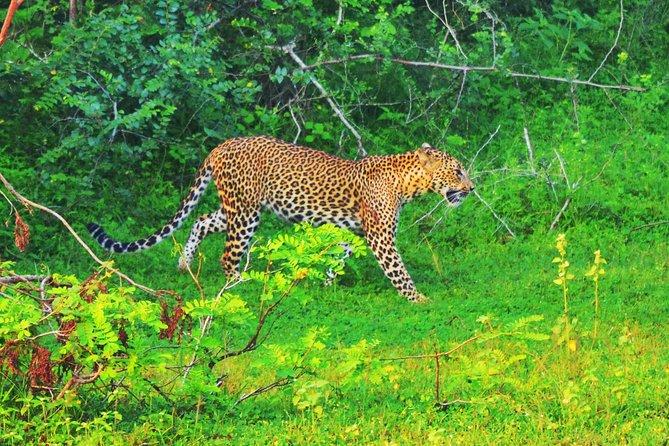 An amazing Safari Experience With Isuru at Yala National Park