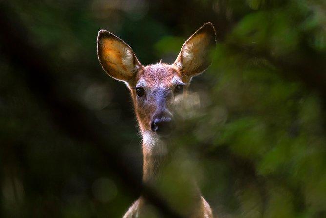 The Wildlife Photography Walk