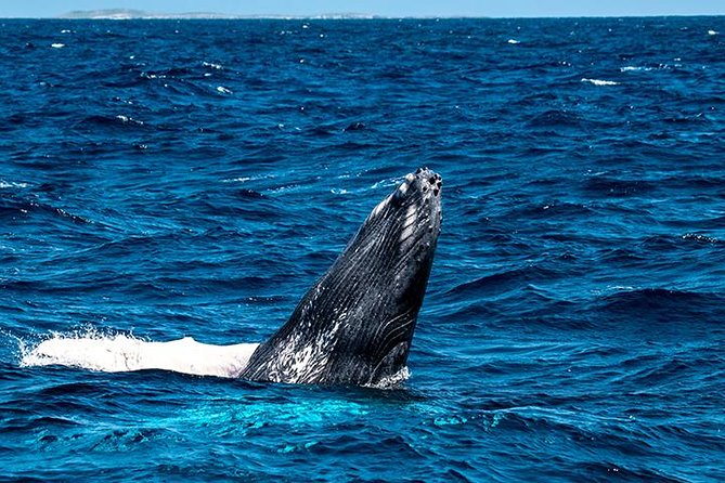 Private Whale Watching Charter (Grand Turk)