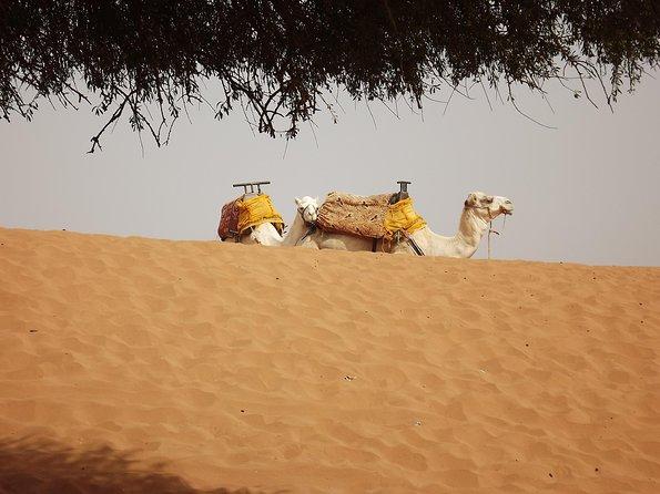 Massa 4x4 & small dunes day trip from Agadir