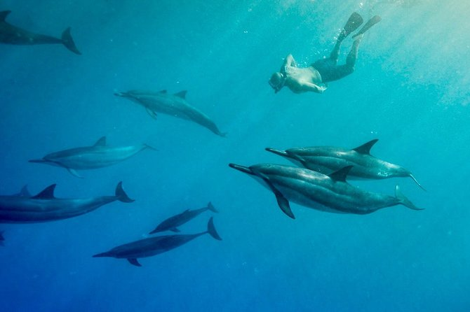 Snorkel by Wild Dolphins, Guarantee! Boat Adventure