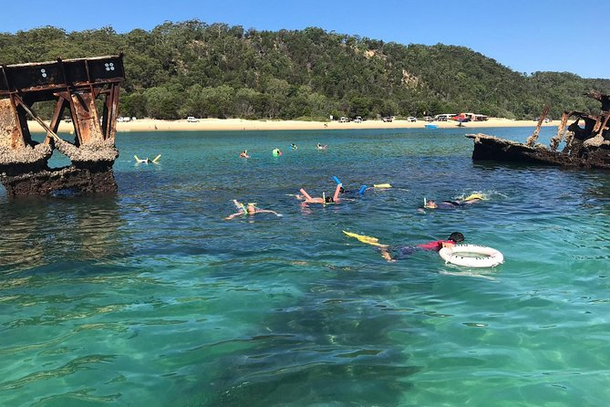 No Extra Cost! Gold Coast Dolphin Watching Cruise & Tangalooma Wrecks Snorkeling photo 8