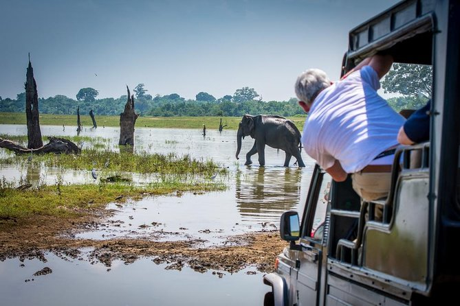 Half-Day at Udawalawe National Park ex-Galle | Jeep Safari Included photo 6