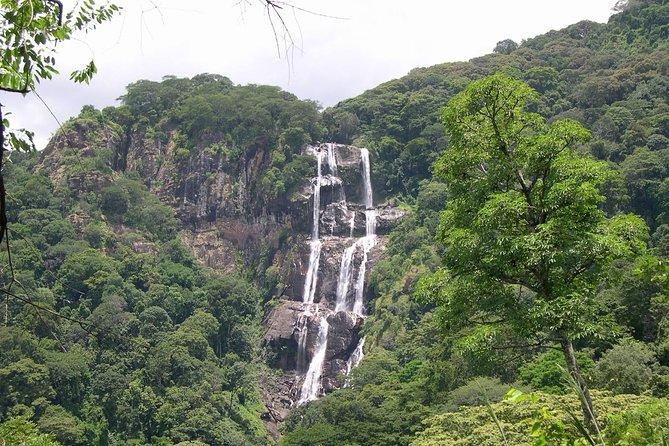 Mikumi National Park To Udzungwa Mountain National Park Tour 2 days 1 night