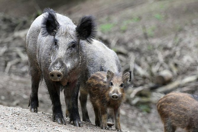 Private Group Wildlife Tour in National Park Hoge Veluwe