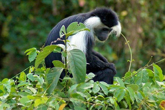 Day Trip Tour To Udzungwa Mountains National Park