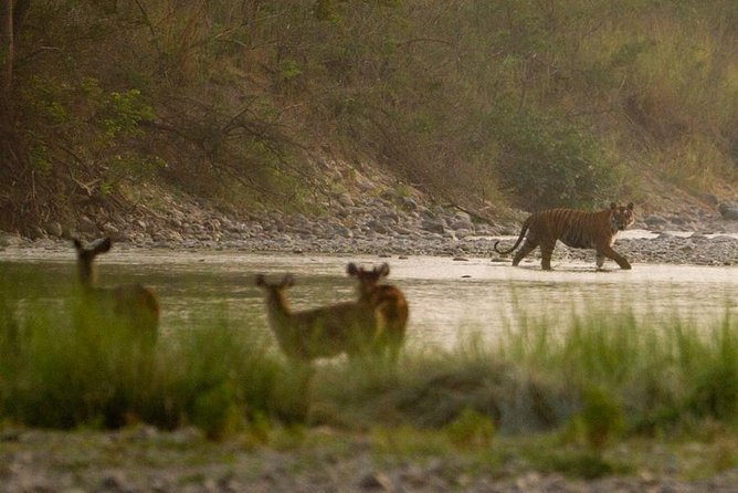 Corbett Tiger Safari