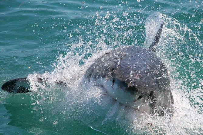 Shark Cage Diving and Viewing from Hermanus