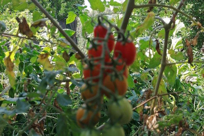 Garden tour and bruschetta tasting