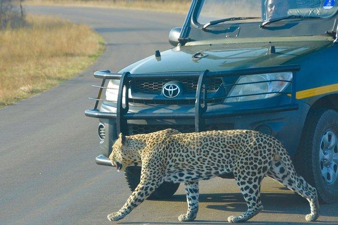 Private 3 Days Kruger Park Safari - Glamping