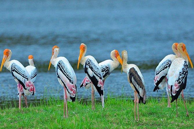 Morning Tour at Bundala National Park by Kamal Safari