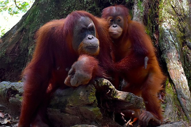 Private Day Tour from Medan: Orangutan Trek with EcoTravel Bukit Lawang