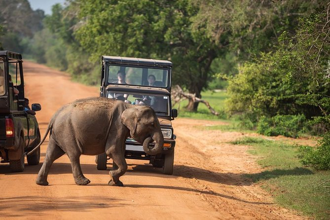 Full-Day at Yala National Park ex-Kandy | Jeep Safari Included