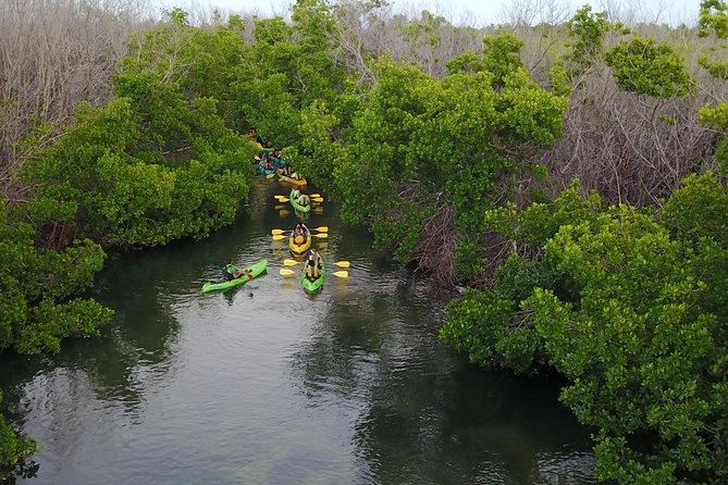 Bio Bay Kayak Tour in Puerto Rico