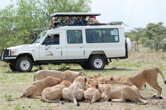 Full-Day Private Serengeti Safari from Mwanza