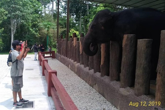 For Big Group Elephant Sanctuary & Batu Caves Private Tour