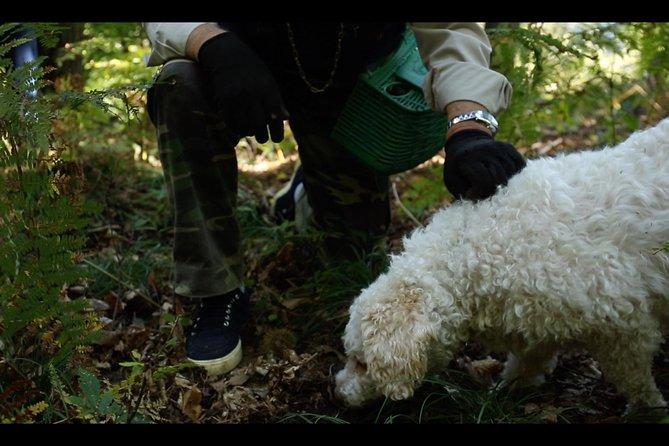 Mushroom And Truffle Hunting