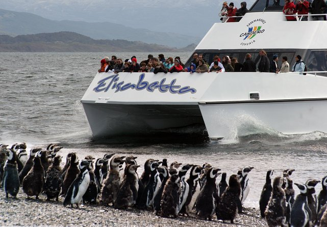 Canoero Catamarans: Isla de los Lobos, Les Eclaireurs Lighthouse and Pingüinera tour