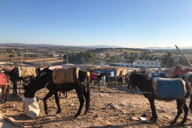 Berber Market in Ida Ogourd & Visit of an Argan cooperative.