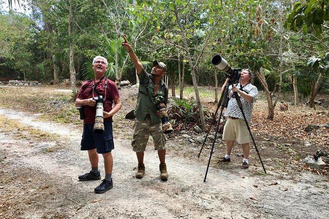 Mahahual and Costa Maya Birdwatching