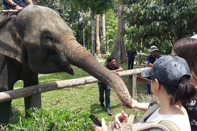 Private Tour: Kuala Gandah Elephant Sanctuary and Batu Caves Tour from Kuala Lumpur with Lunch