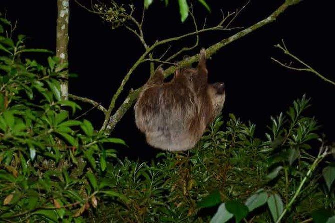 Monteverde Cloud Forest Night Walk