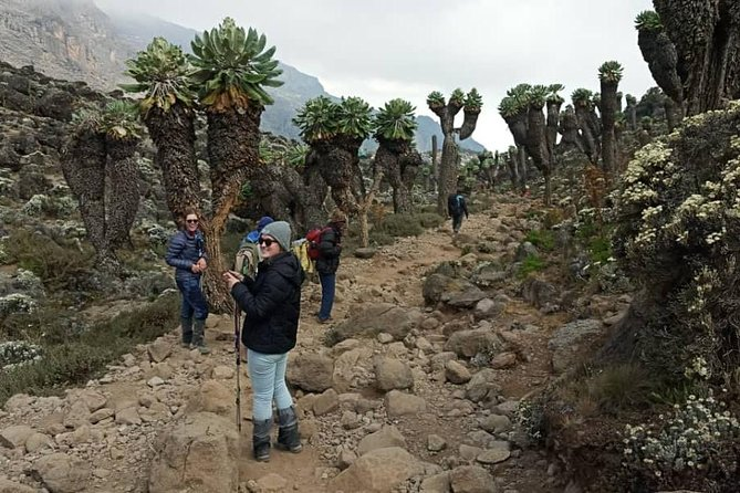 Mount Kilimanjaro – Machame Route 7 days photo 3
