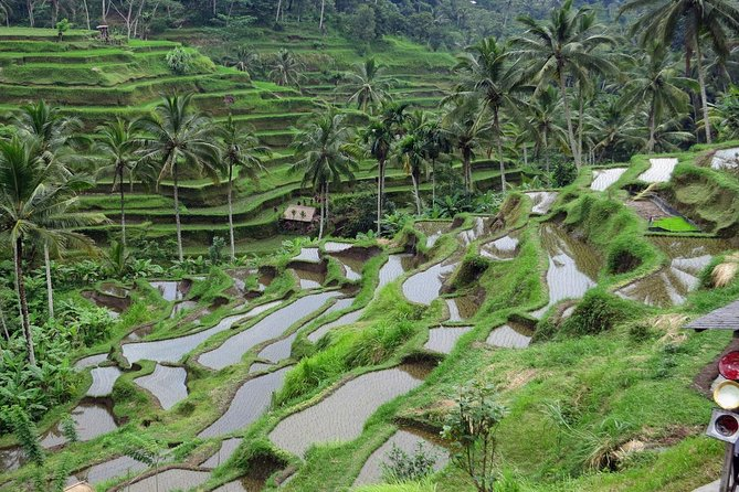3 Days Bali Tour Package with Airport Transfer